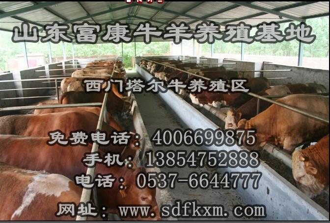 供应天水养牛天水养牛场天水大型养牛场