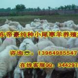 供应河南养羊场在哪里河南养肉羊赚钱吗河南肉羊养殖效益如何利润大吗