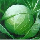 供应珠海食材供应商蔬菜供应商农产品供应商水果供应商批发