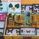 幼儿园幼儿实物标本教具箱图片