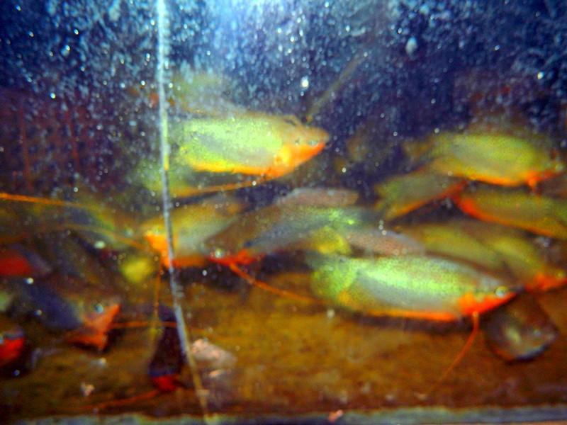 大型热带鱼图片