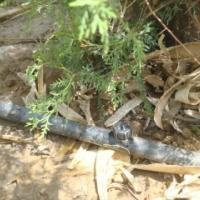 供应滴灌带滴灌作用
