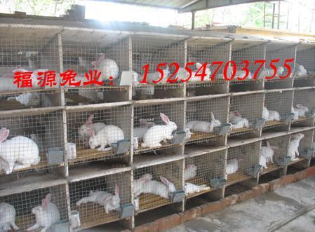 獭兔最新行情_供应养殖獭兔行情獭兔最新价格獭兔利润效益