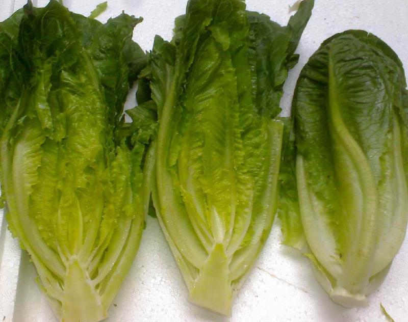 昆明市罗马生菜 罗马生菜供应商 供应罗马生菜 一呼百应网