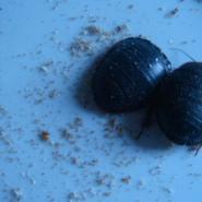 土元产卵虫的饲养方法图片