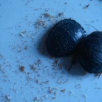 供应土元产卵虫的饲养方法
