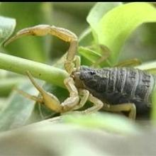 供应邯郸蝎子养殖如何协调温湿度的关系