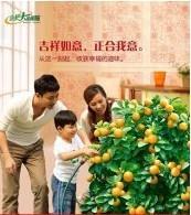 22岁刘小姐的养老保障计划批发