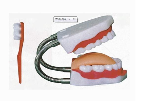 供应牙护理保健模型