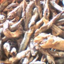 供应饲料鱼干饲料鱼蛋白60价格3000元每吨