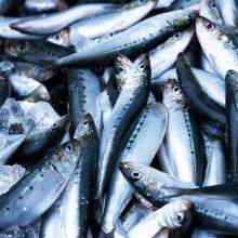 供应饲料鱼干小干鱼熟鱼干怎样做成的
