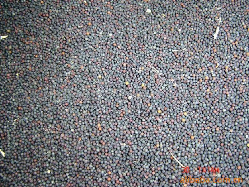 供应油菜籽