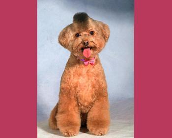 宠物美容护理服务图片