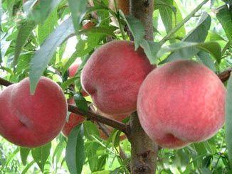 供应新鲜水果
