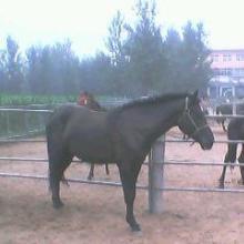 甘肃酒泉赛马场v赛马什么价格酒泉什么地方有养马的去哪里买马批发