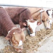 江西萍乡肉牛驴养殖萍乡大型肉驴养殖萍乡种驴养殖批发