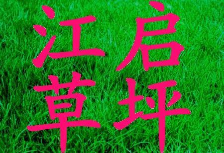 草皮原图   供应草坪草皮,草坪种植基地,任您选择品种,安徽草高清图片