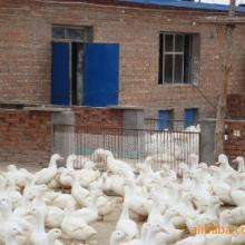 供应鸡舍加温设备鸡舍升温锅炉热卖中批发
