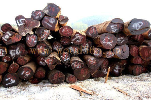 供应木材进口报关代理木材进口报关流程图片