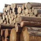 木材进口代理图片/木材进口代理样板图 (2)