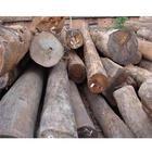 供应原木进口代理图片