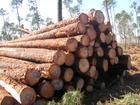 供应木材进口报关流程图片