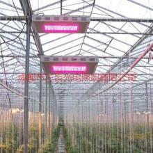 供应LED植物补光灯,LED植物生长灯批发批发