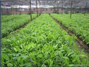 广西宾阳县壮大苗木场