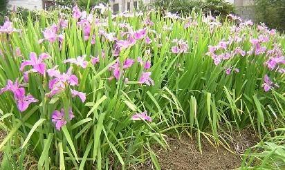 各种花卉图片及名称图片大全 各种花卉的名称及对应图片图片