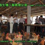 发酵养猪养鸡养鸭养牛专用EM菌种图片