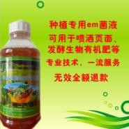 益加益种植专用em菌种菌液生物有图片