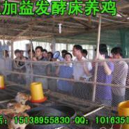 发酵床养鸡专用EM菌种制作发酵床图片