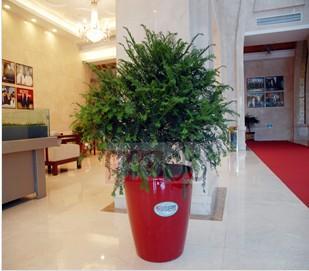 江苏红豆杉生物科技公司
