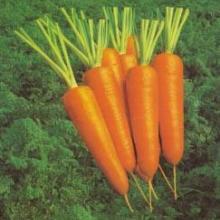 供应南昌胡萝卜的价格