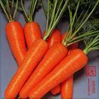 供应山东郓城日本三红胡萝卜的规格
