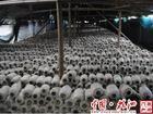 广西浙创石膏粉价格表