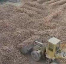 供應干木薯淀粉圖片