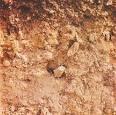 供应粉状废油土