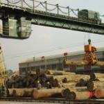 天津港进口木材板材原木报关清关报价