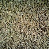 多年生黑麦草种子图片/多年生黑麦草种子样板图 (2)