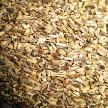 牧草种子菊图片/牧草种子菊样板图 (1)