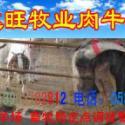 供应宁夏大武口最新小牛犊价格波尔山羊肉驴价格