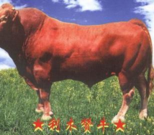 江苏波尔山羊养殖效益分析图片