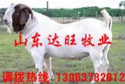 供应甘肃红古最新小牛犊价格波尔山羊肉驴价格批发