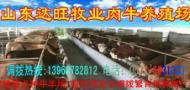 山东达旺牧业肉牛波尔山羊肉驴小尾寒羊养殖场