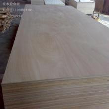 供应桉木胶合板