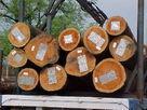 南美木材进口报关南美原木进口代图片