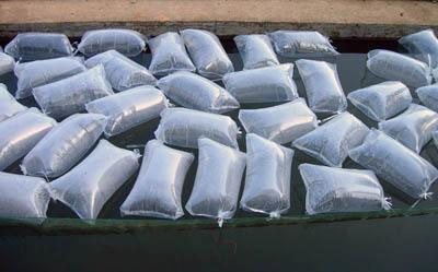 鮥鱼鱼苗的价格销售