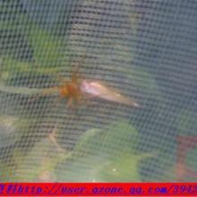 供应繁殖黄颡鱼繁殖催产剂 繁殖黄颡鱼繁殖催产剂黄颡鱼催产批发