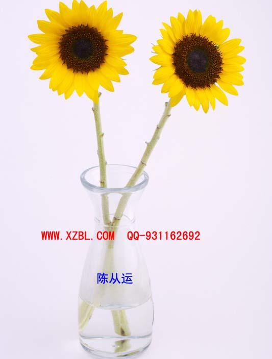 供应玻璃插花瓶徐州生产厂家